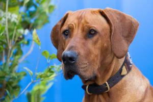 Outdoor Hundefotografie