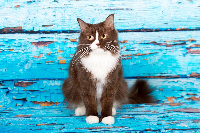Katzen Fotografie, Katzenfotografie, Katzenportraits, Darmstadt, Dieburg, Aschaffenburg, Frankfurt