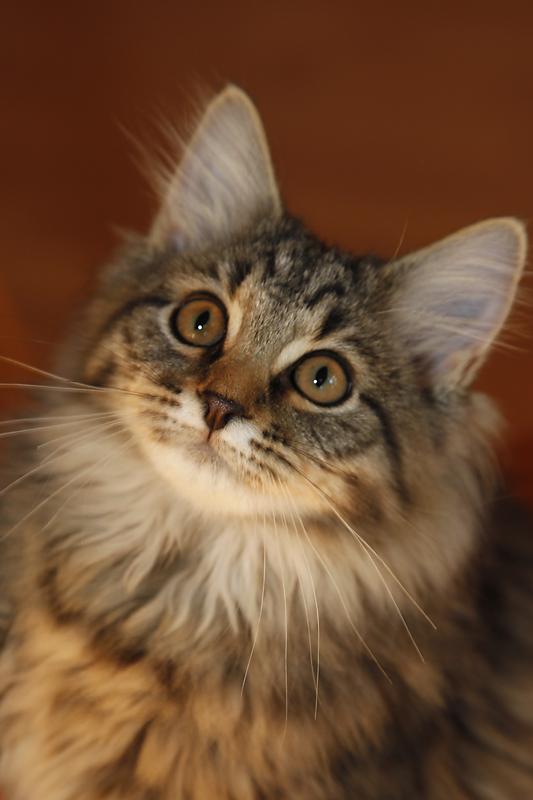 Katzen Fotografie, Katzenfotografie, Katzenportraits