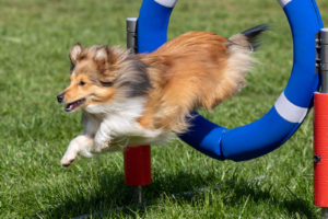 Agility Shooting Flying Dogs