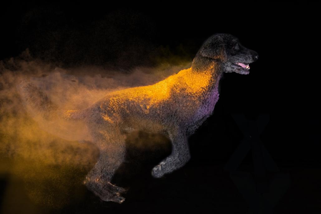 Hunde Action Holi Pulver Shooting
